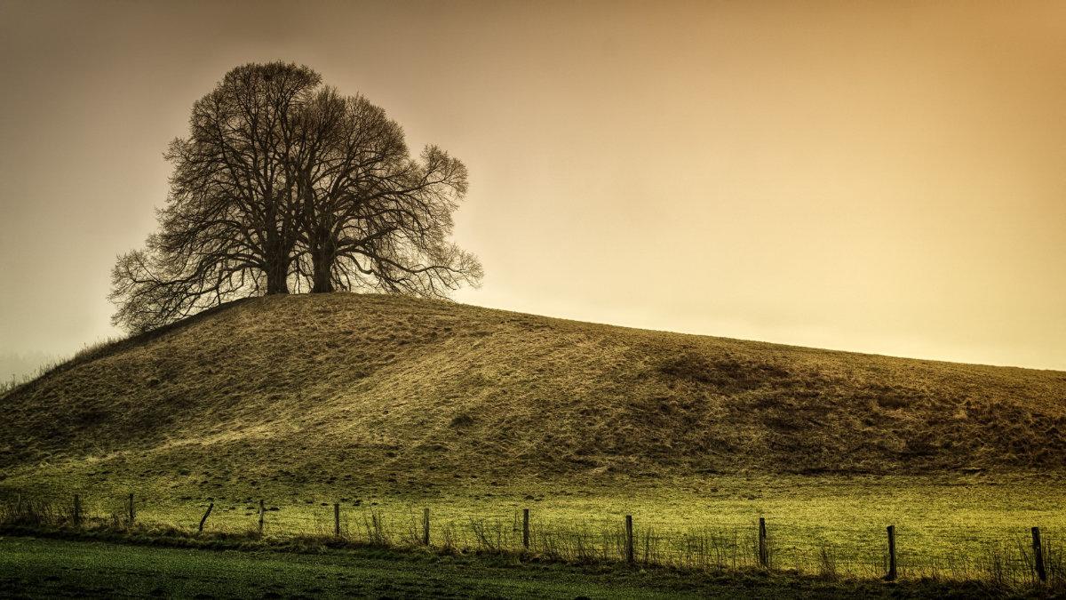 Foto einer Linde auf einem Hügel
